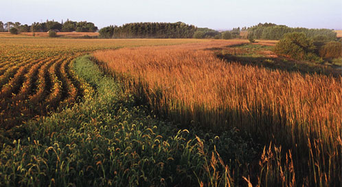 Conservation buffer, © Lynn Betts/USDA NRCS