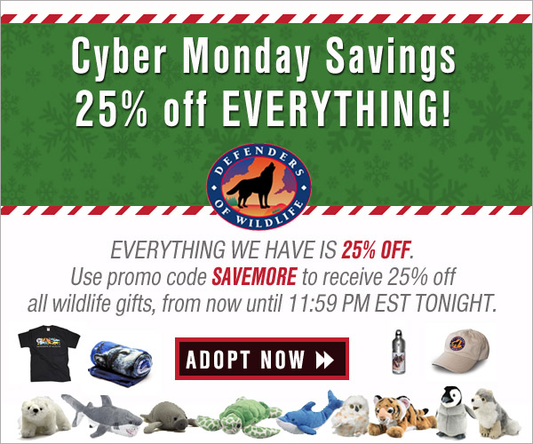 Cyber Monday - 25% Off!