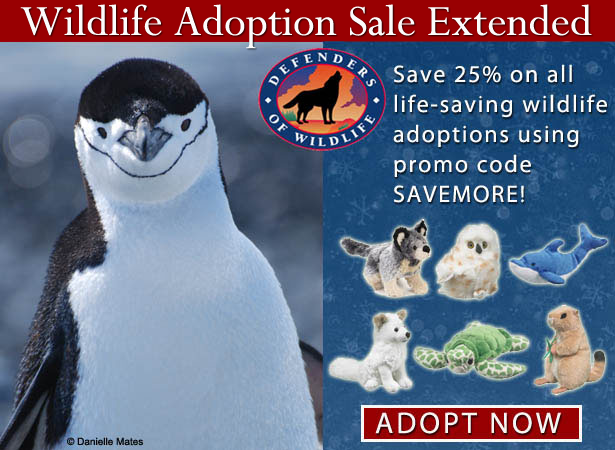 25% off of wildlife adoptions!