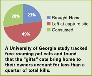 Pet cats and gifts graph