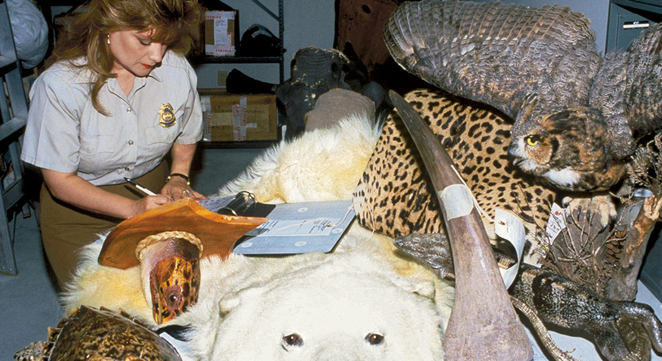Wildlife trafficking, © John and Karen Hollingsworth/USFWS