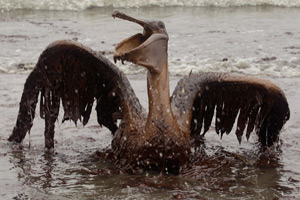 Pelican, AP Photo/Charlie Riedel