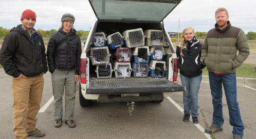 Defenders' staff get ready to release black-footed ferrets. From left: Russ Talmo, Kylie Paul, Charlotte Conley and Jonathan Proctor,