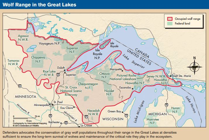 Places for wolves in the Great Lakes, © Defenders of Wildlife