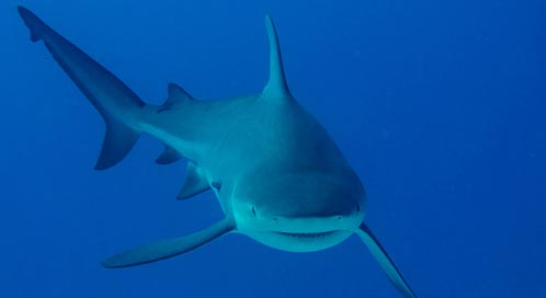 Sharks | Basic Facts About Sharks | Defenders of Wildlife