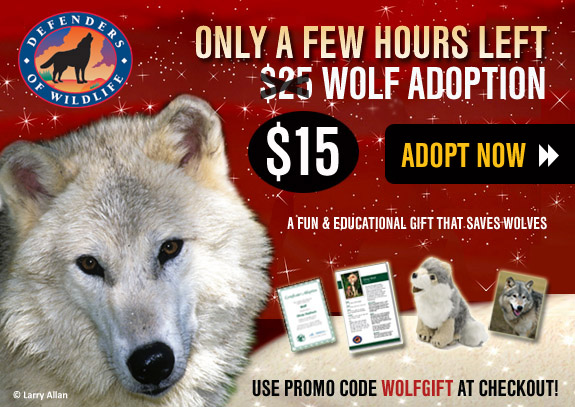 Wolf Savings Adoption: Only a Few Hours Left