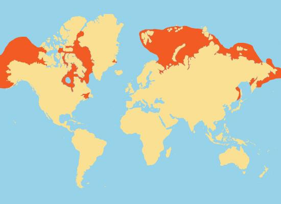 Beluga Whale Range Map