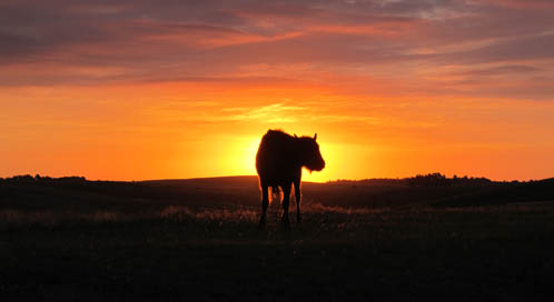 Bison, © Walter Novak