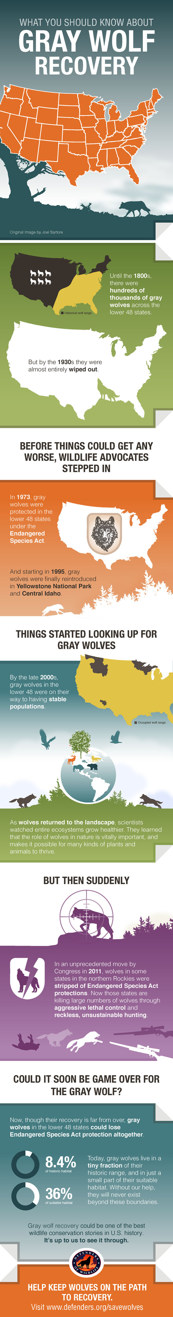 What You Should Know About Gray Wolf Recovery Infographic - Defenders of Wildlife