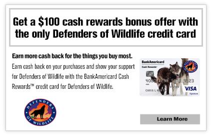 Get a $100 cash rewards bonus offer