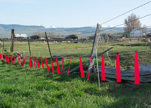 Fladry fencing