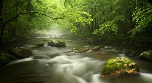 Forest, © Trisha Flaherty