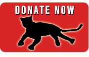 Donate Now for Florida Panthers