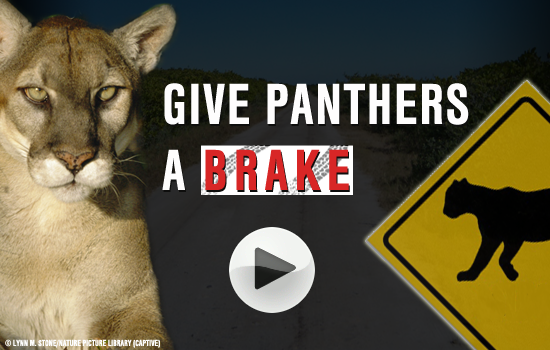Give Panther a Brake!