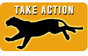 Take Action for Florida Panthers