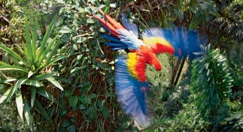 Parrot, © Tui De Roi/Minden Pictures