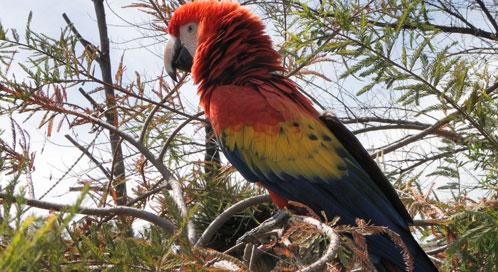 Scarlet macaw, © Maria Elena Sanchez
