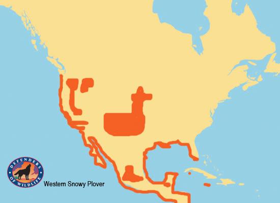 Western Snowy Plover Range Map